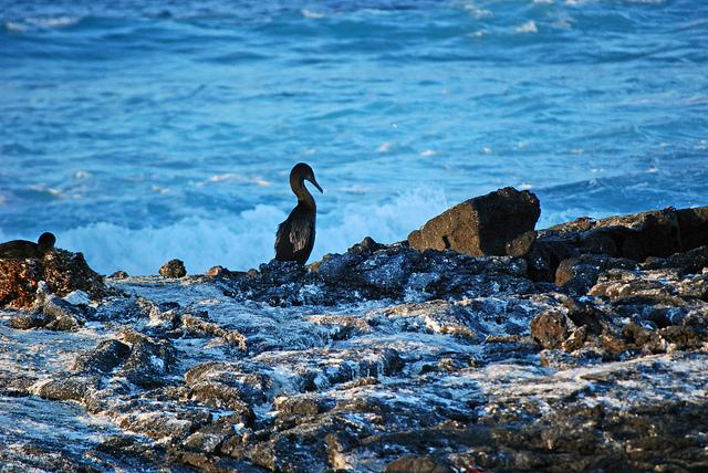 Punta Espinoza  /  Fernandina Island
