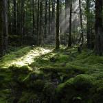 Якусима — остров первозданных лесов