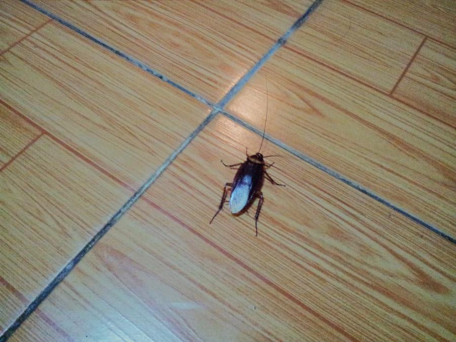 насекомые в отеле, вьетнам