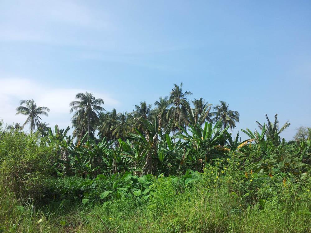джунгли вьетнама