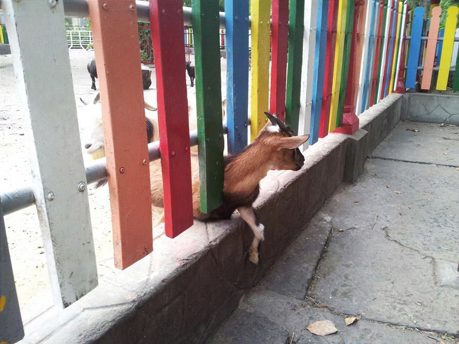 животные зоопарка в хошимине