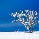 Россия: 9 мест, куда поехать зимой 2018-2019