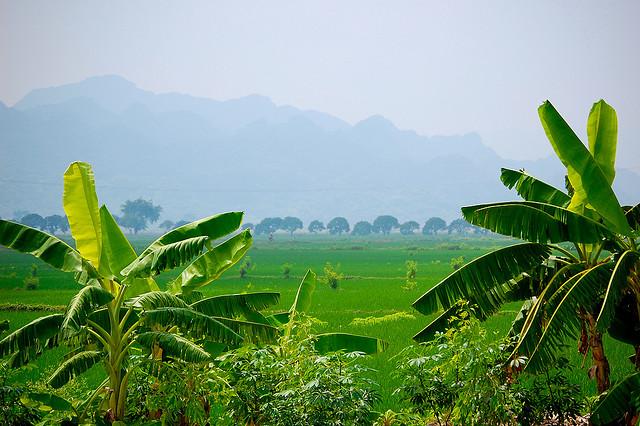вьетнам: страна, где недорого жить