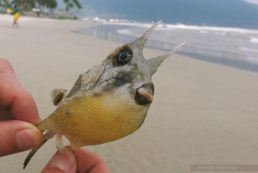 рыбы вьетнама, дананг