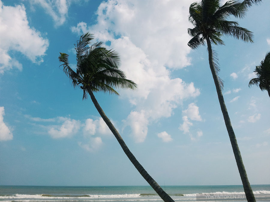 пляж дананга, вьетнам, пальмы, кокосы, море