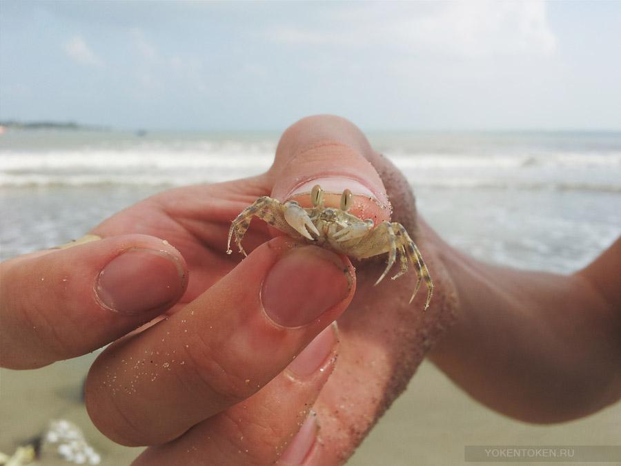 краб на пляже дананга