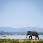 Виза на Шри-Ланку для россиян — 2018