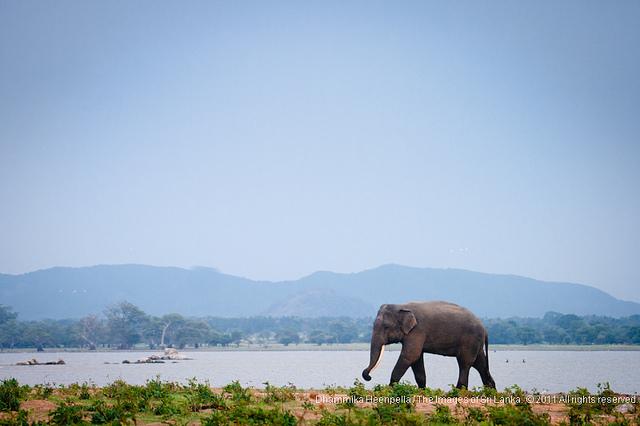 Photo © Dhammika Heenpella / Images of Sri Lanka / flickr.com